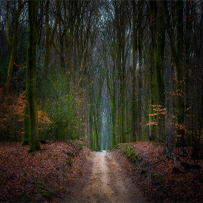 Sex in het bos -  Ultieme Adult sex Blog